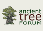 ancient tree forum